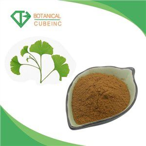 Bulk Pure Natural Ginkgo Biloba Extract Ginkgo Biloba Leaf Powder Extract 24 6