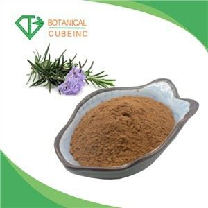 Ctm 100% Natural Radix Isatidis P. E. Indigowoad Root Glucoside Isatis Root Extract Powder for Protecting Cardiovascular System